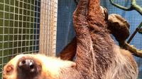 World Aquarium Sloth Experience