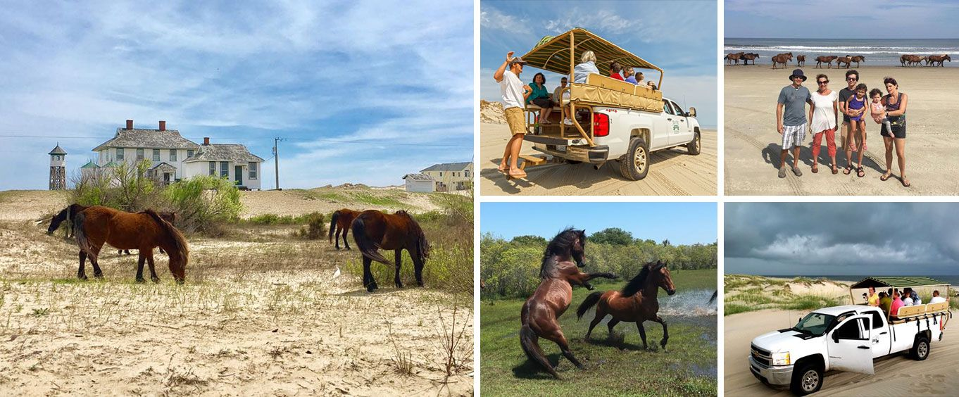 Outer Banks Wild Horse Truck Tour Collage