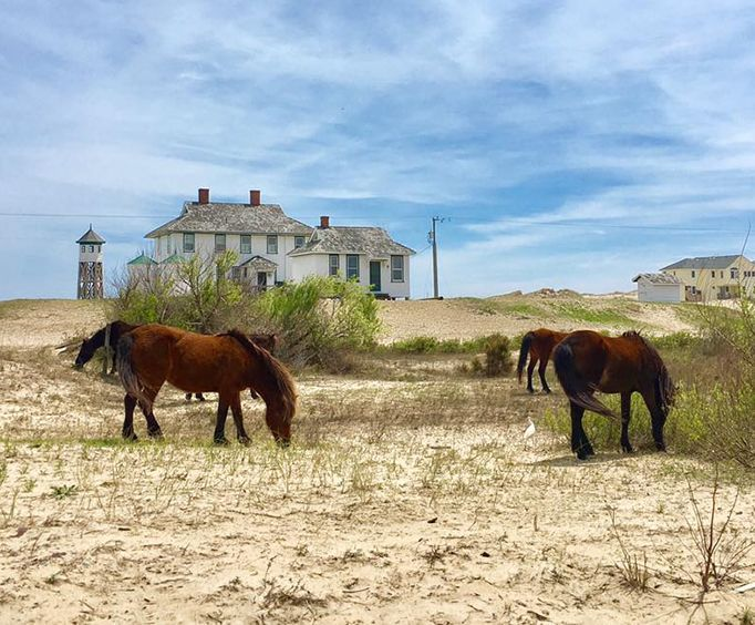 Two Horses on the Outer Banks Wild Horse Truck Tour