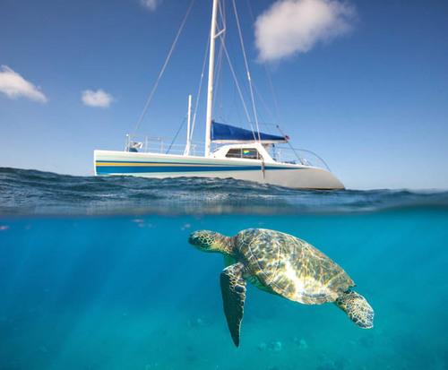 Sea turtle next to cruise ship