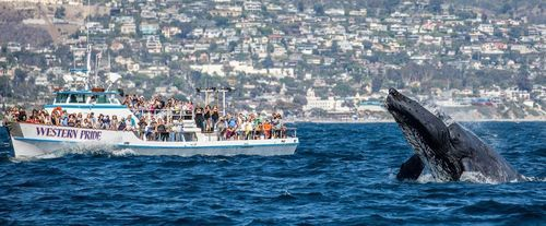 Anaheim Whale Watching Cruise - Blue Whales, Gray Whales, Finback Whales & More, tail