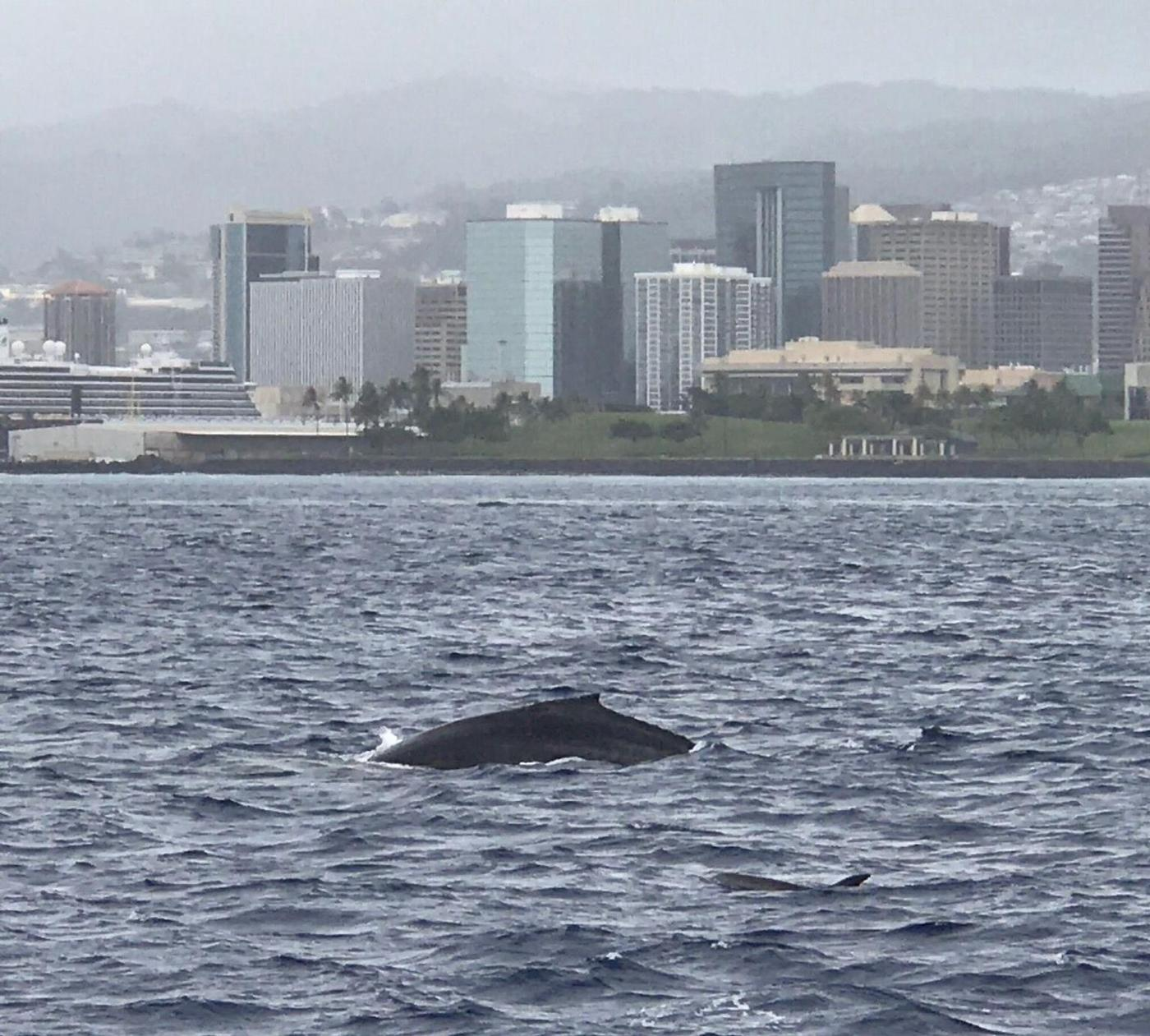 Enjoy incredible views of humpback whales from a 60-foot-high observation deck!