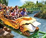 Tampa Bay's Busch Gardens Experience