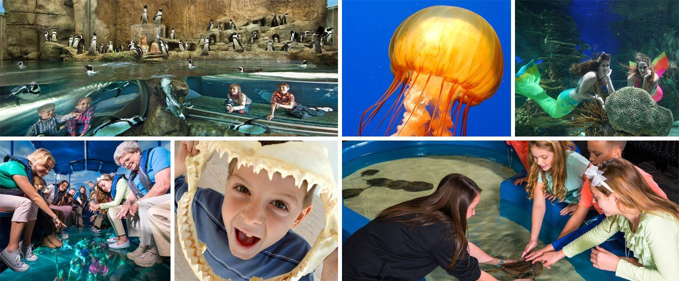 Have Fun at Ripleys Aquarium of the Smokies