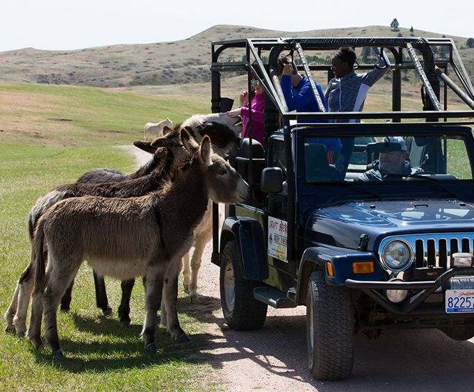 Custer State Park Safari Jeep Small Group Tour