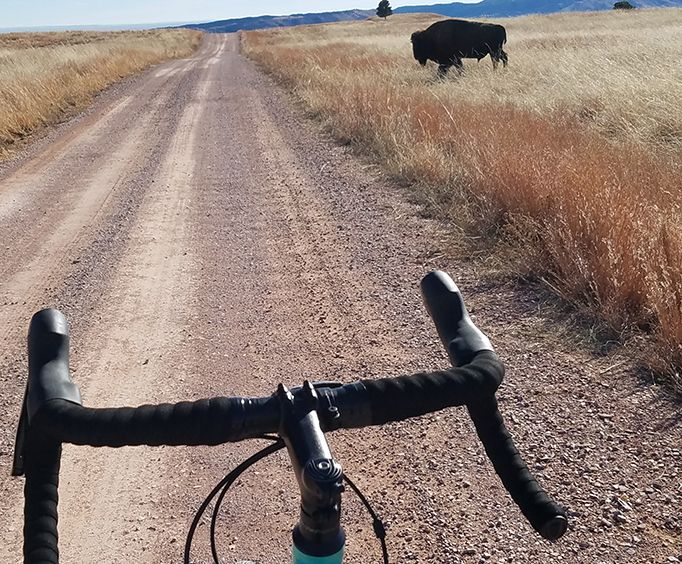 Viewing Buffalo from a Bike