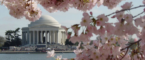 Cherry Blossom Tour, Washington DC