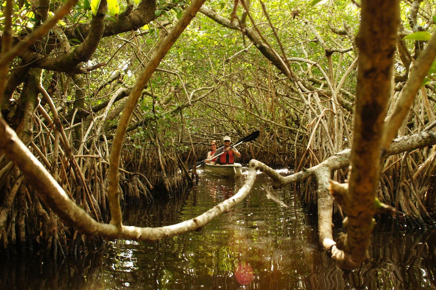 Making our way through the mangrove forest