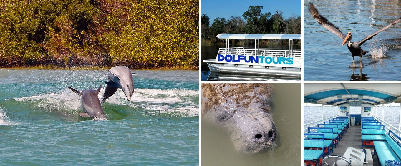 Private Dolphin Manatee Eco River Sightseeing Sunset Tour Collage
