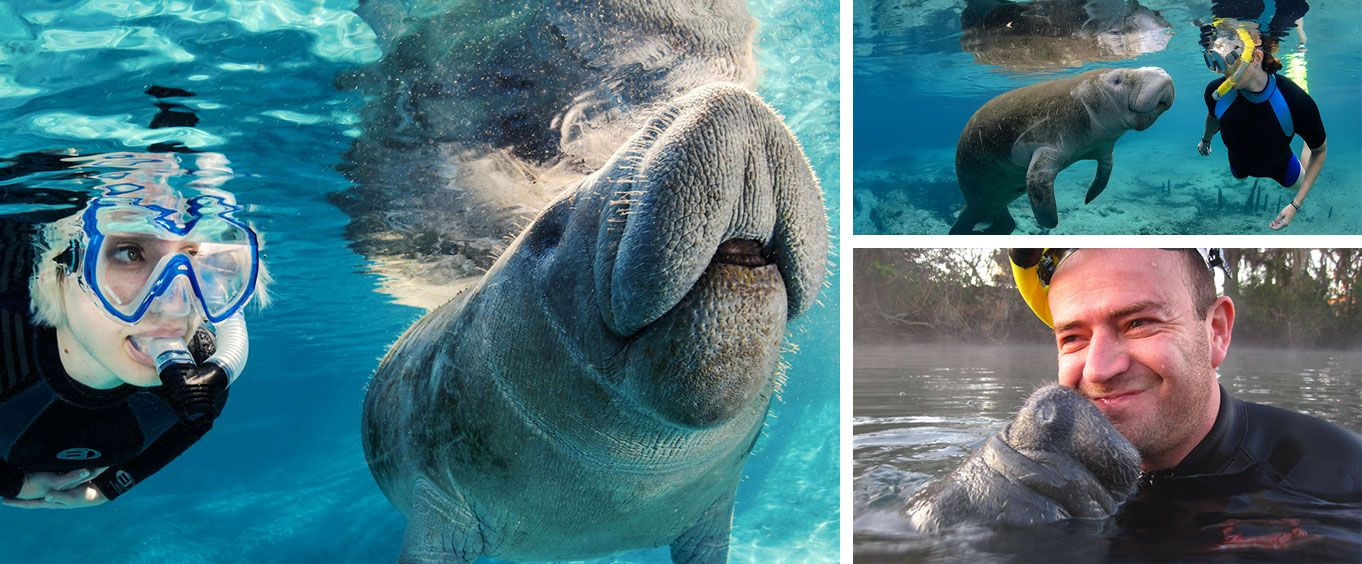 Have Fun with Swim with the Manatees