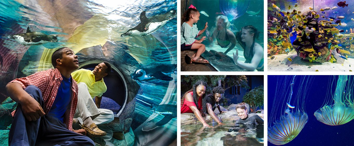 Ripley's Aquarium Myrtle Beach Collage